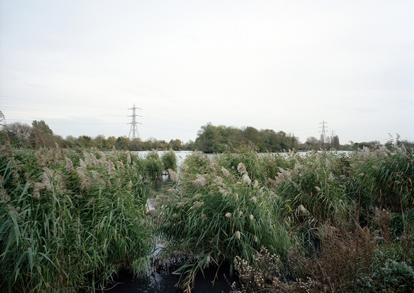 Walthamstow Wetlands - Interventions - Ecology